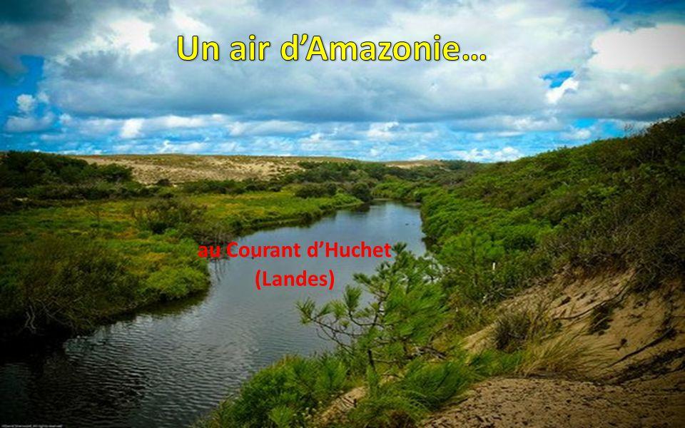 Un air d'Amazonie… au Courant d'Huchet (Landes)