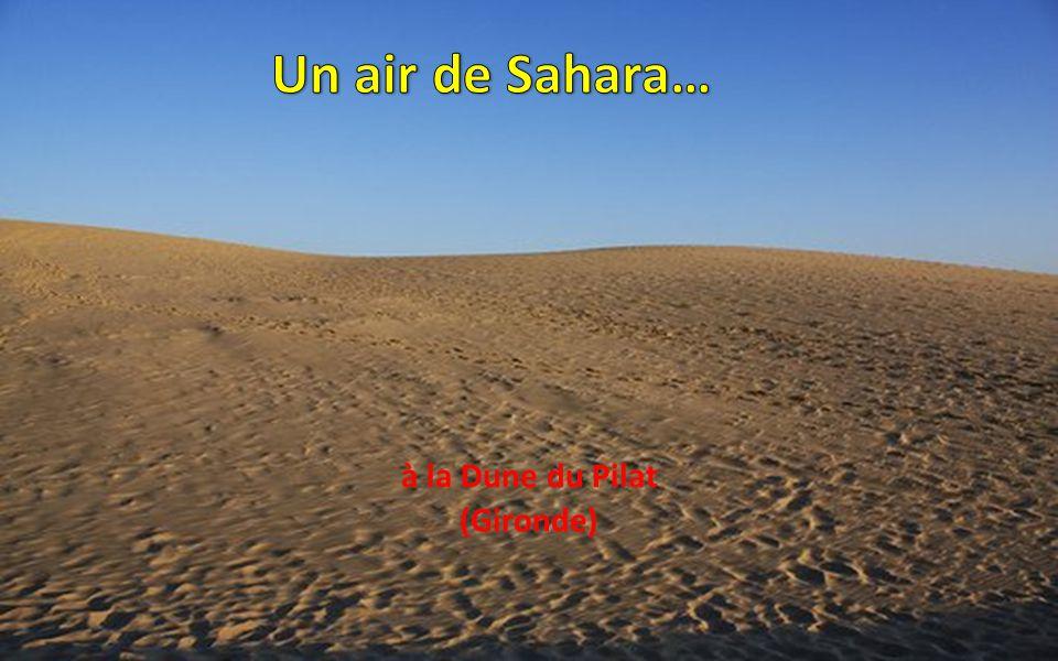 Un air de Sahara… à la Dune du Pilat (Gironde)