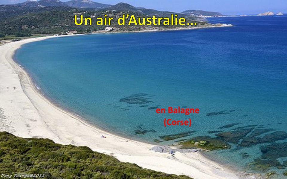 Un air d'Australie… en Balagne (Corse)