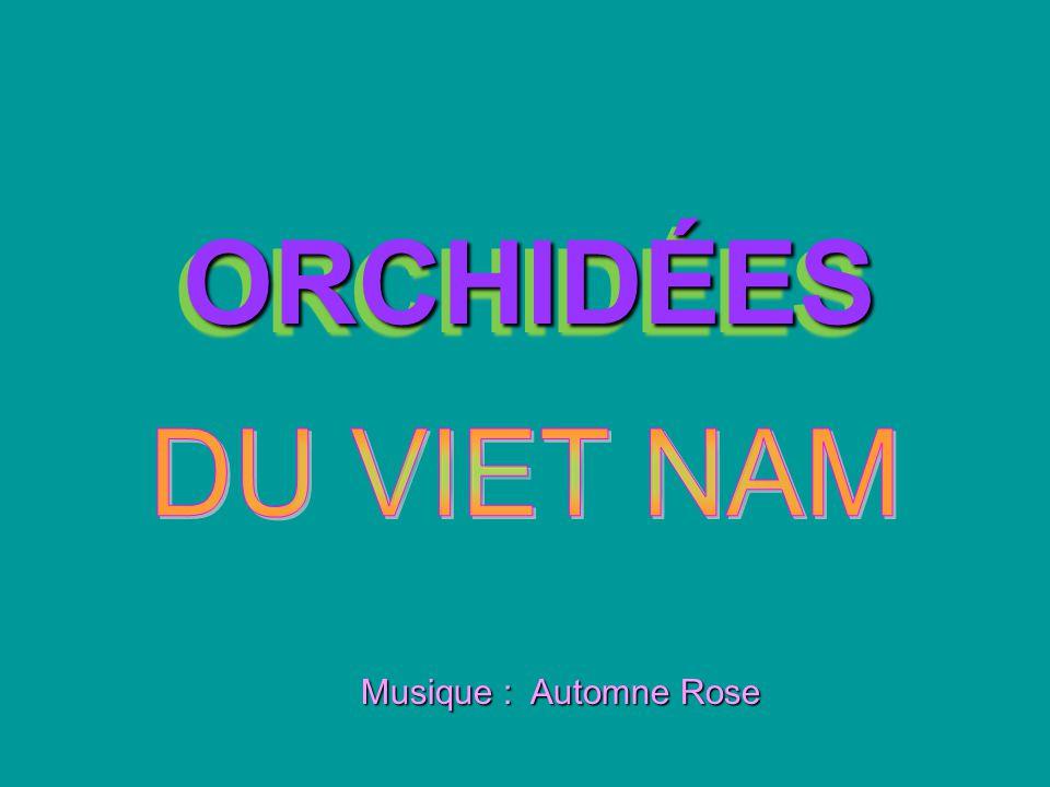 ORCHIDÉES DU VIET NAM Musique : Automne Rose