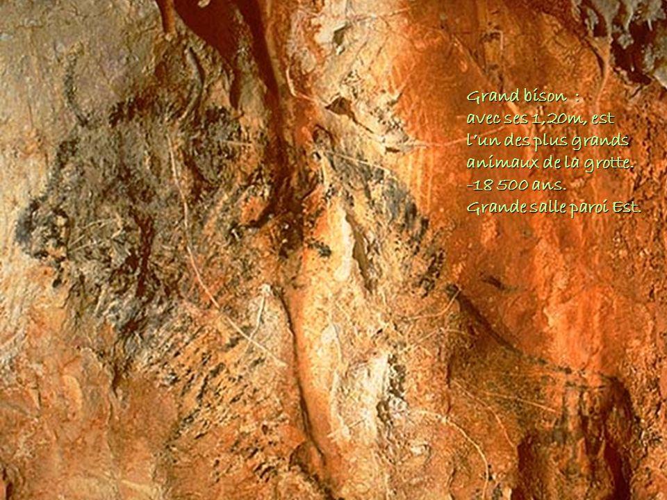 Grand bison : avec ses 1,20m, est l'un des plus grands animaux de la grotte.