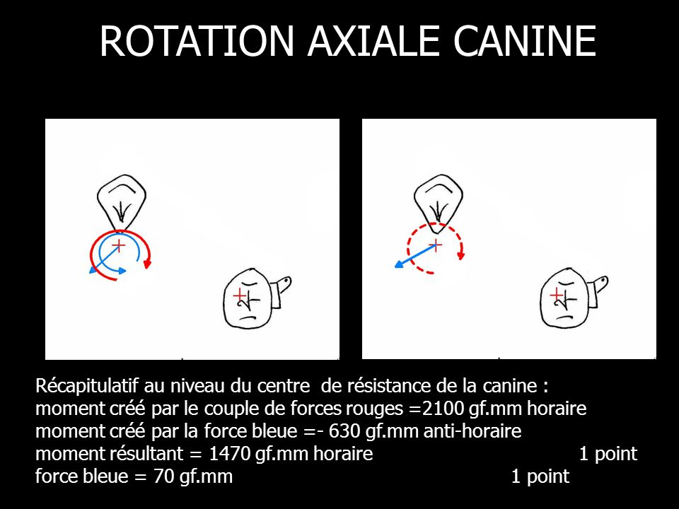ROTATION AXIALE CANINE