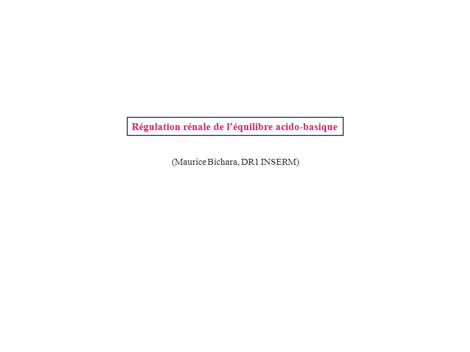 Régulation rénale de l'équilibre acido-basique