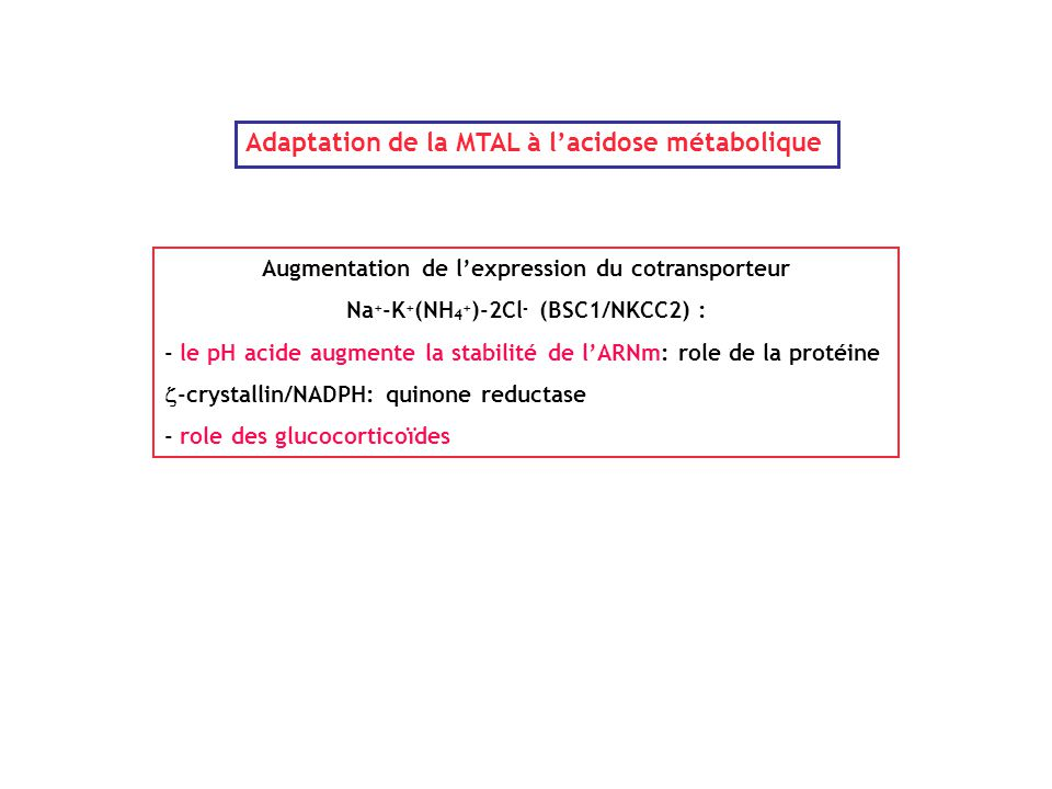 Adaptation de la MTAL à l'acidose métabolique