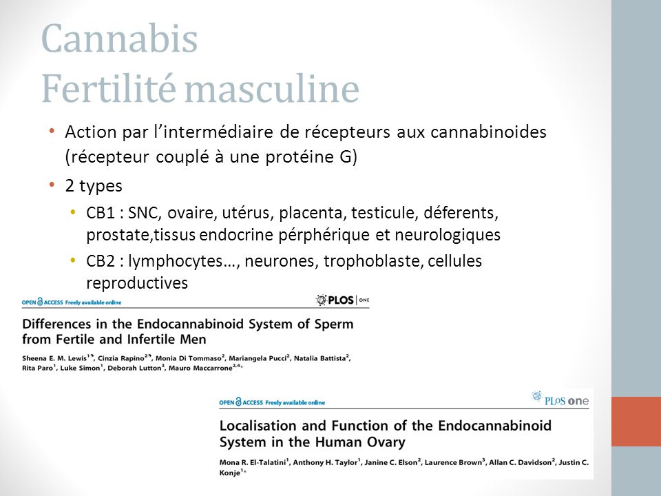 Cannabis Fertilité masculine