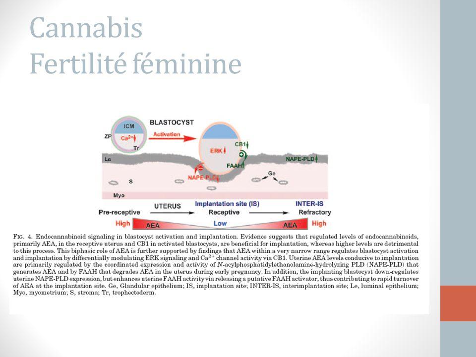 Cannabis Fertilité féminine