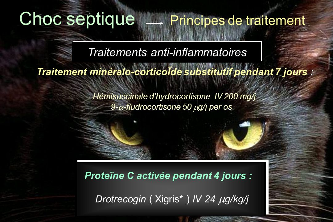 Choc septique Principes de traitement