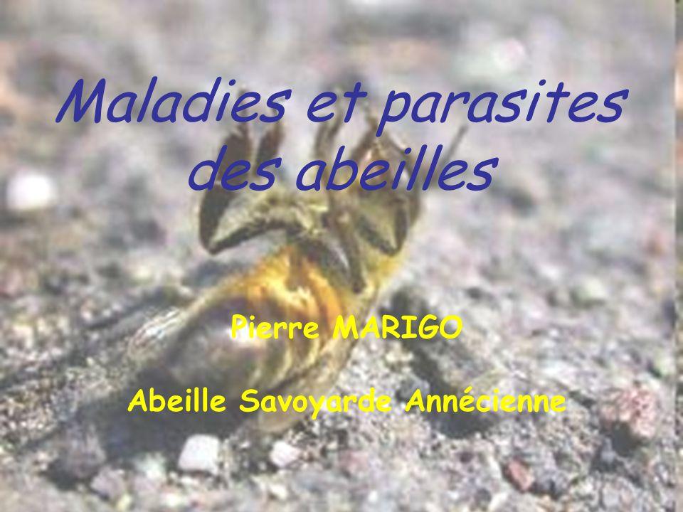 Pierre MARIGO Abeille Savoyarde Annécienne