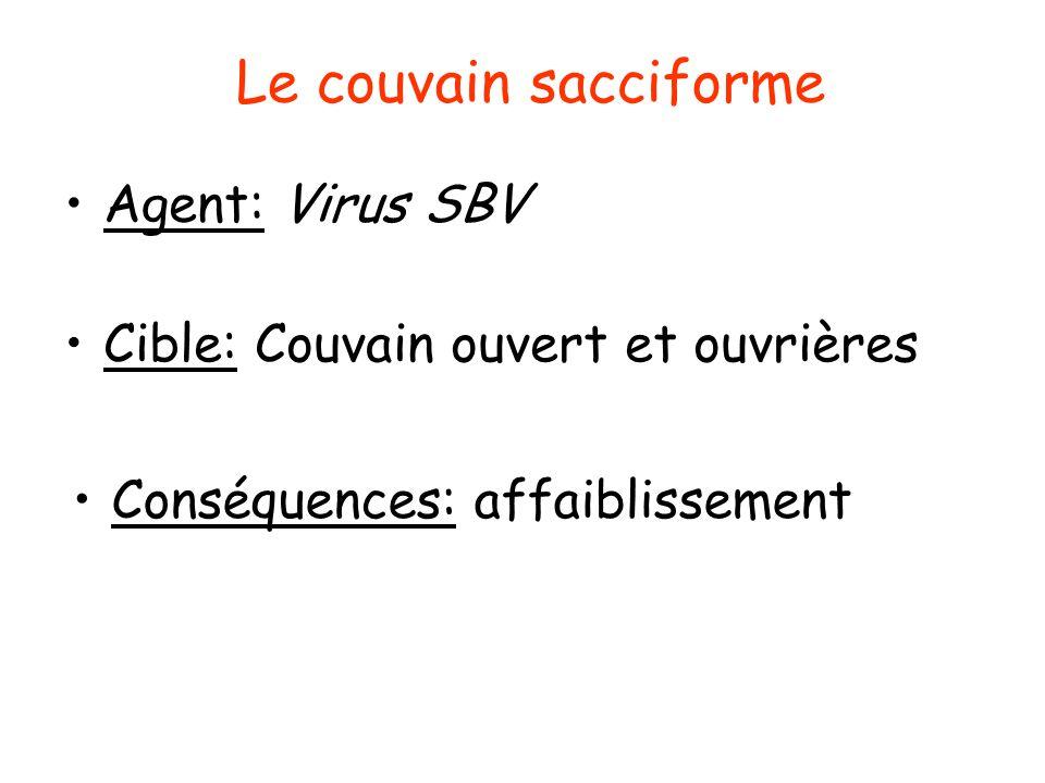 Le couvain sacciforme Agent: Virus SBV