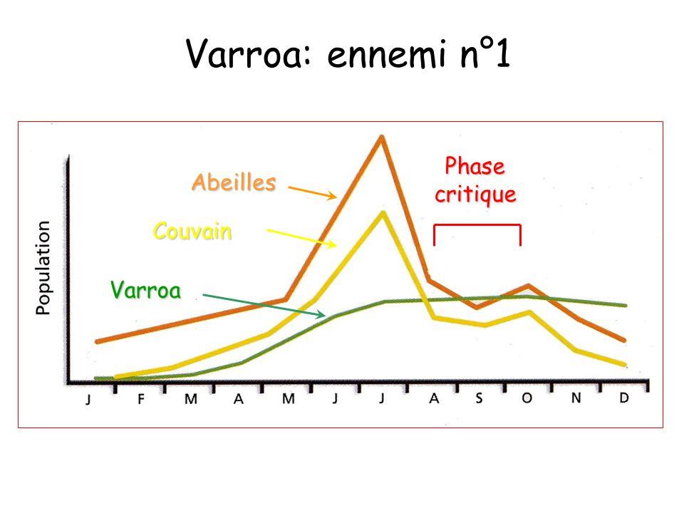 Varroa: ennemi n°1 Phase critique Abeilles Couvain Varroa
