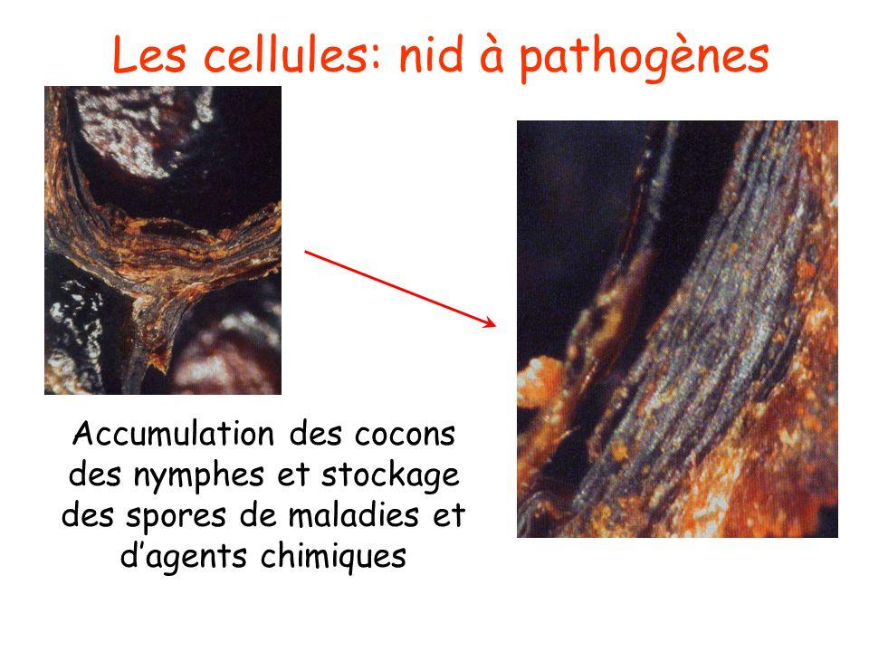 Les cellules: nid à pathogènes