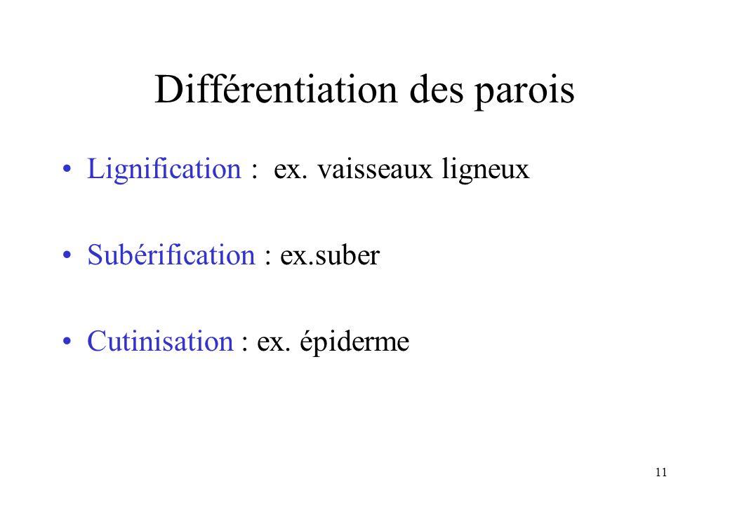 Différentiation des parois