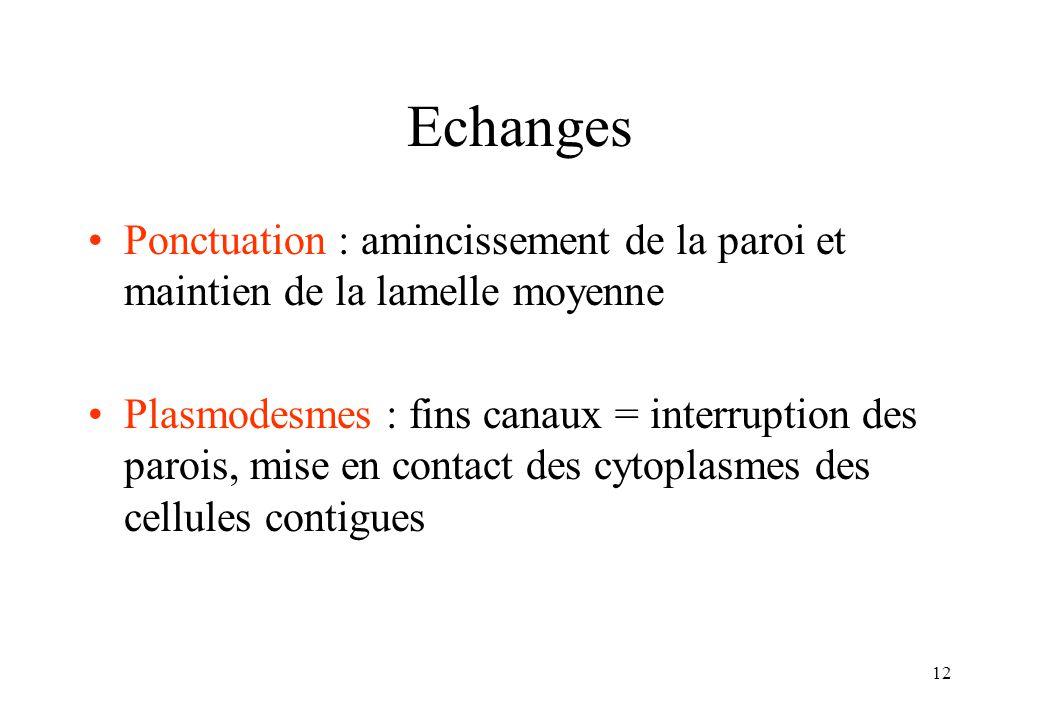 Echanges Ponctuation : amincissement de la paroi et maintien de la lamelle moyenne.