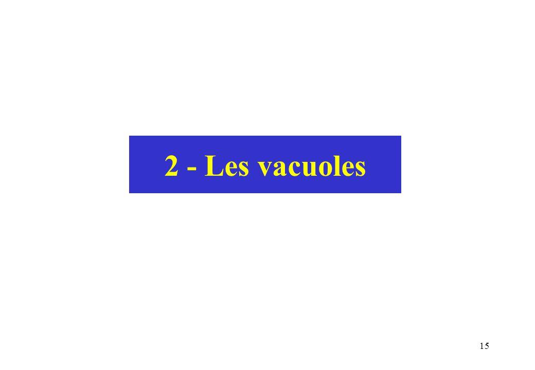 2 - Les vacuoles