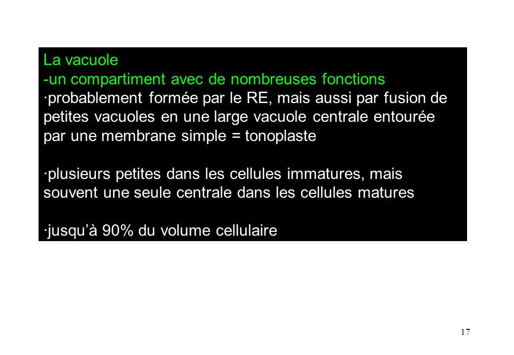La vacuole -un compartiment avec de nombreuses fonctions.