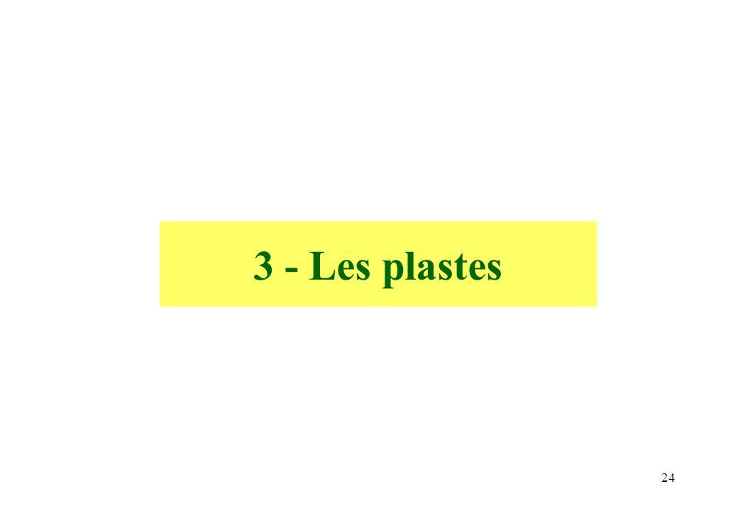 3 - Les plastes