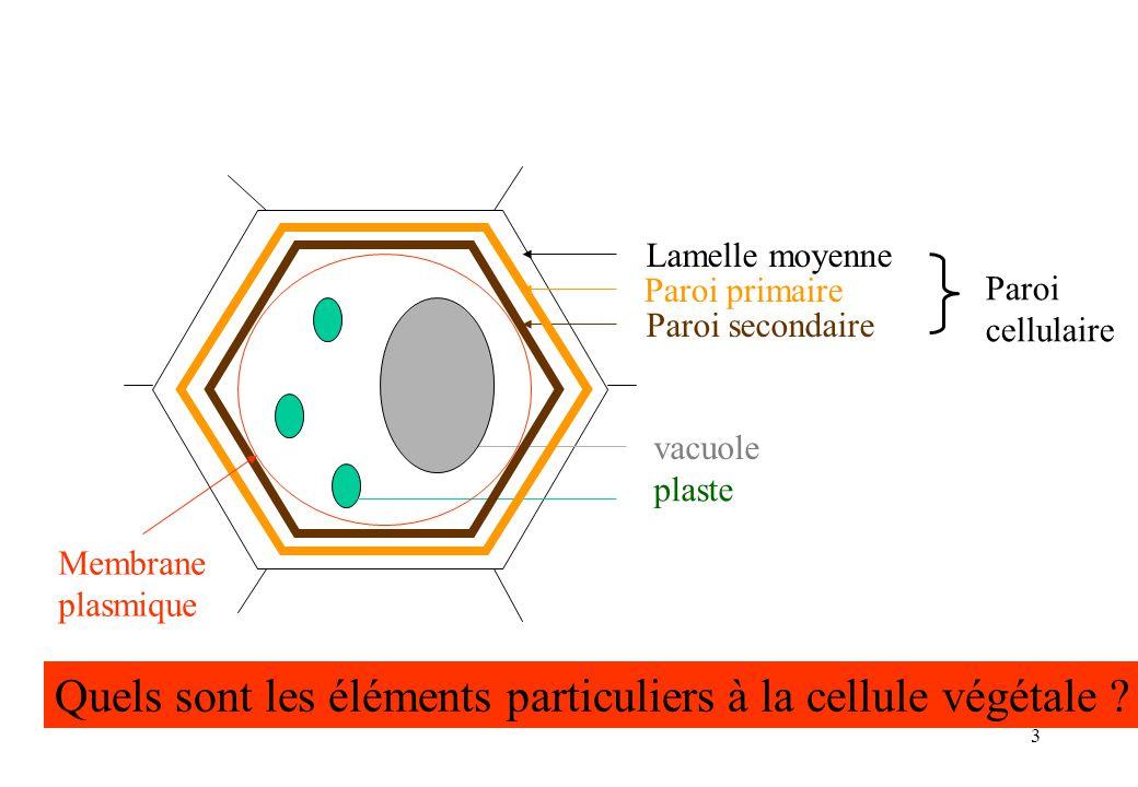 Quels sont les éléments particuliers à la cellule végétale