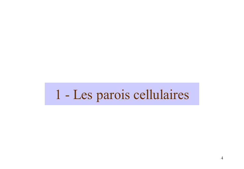 1 - Les parois cellulaires