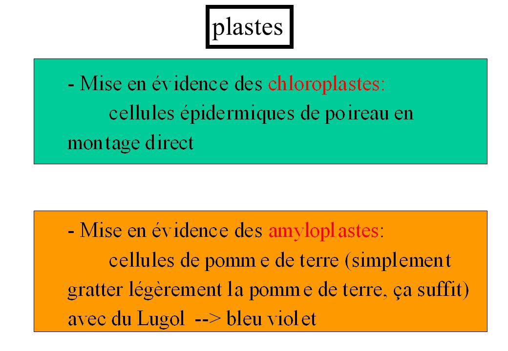 plastes