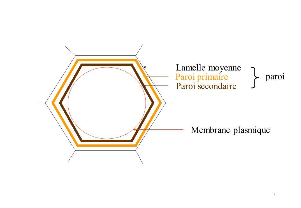 Paroi primaire Lamelle moyenne Paroi secondaire paroi Membrane plasmique