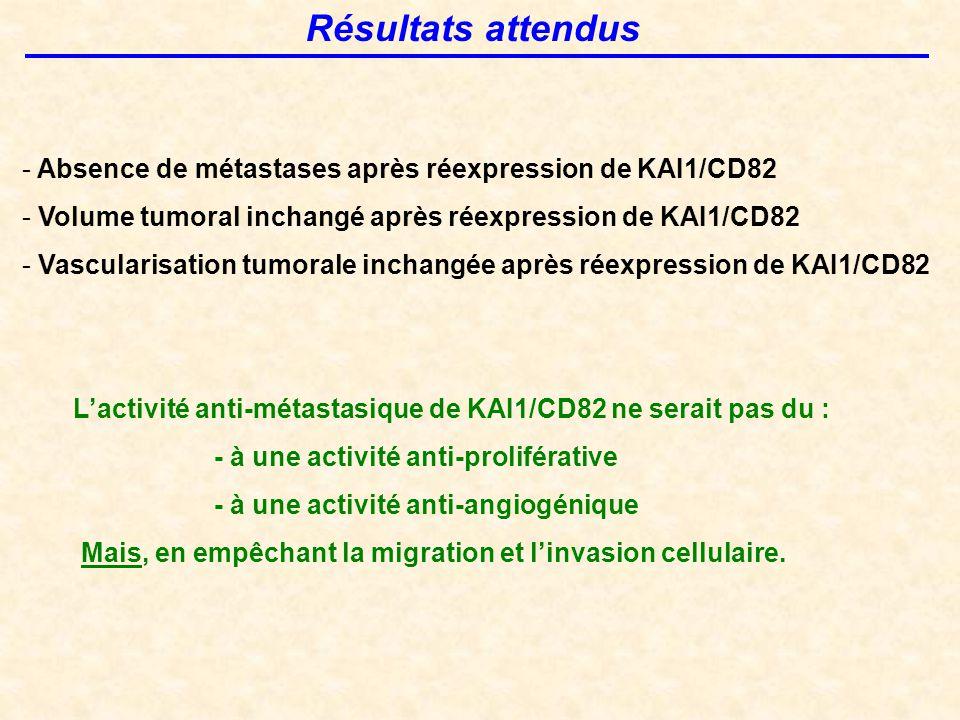 Résultats attendus Absence de métastases après réexpression de KAI1/CD82. Volume tumoral inchangé après réexpression de KAI1/CD82.