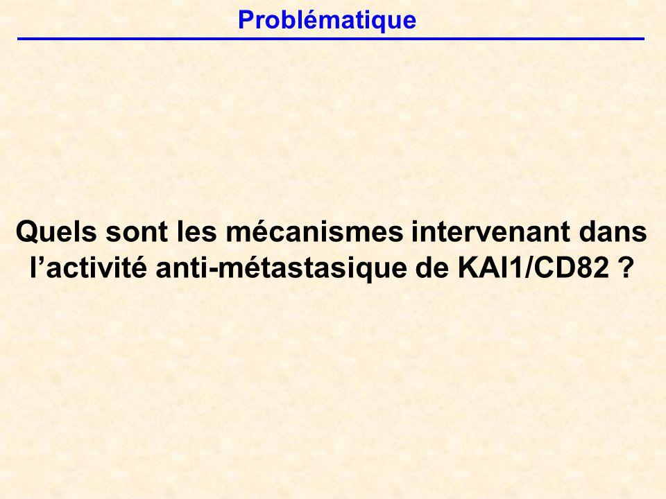 Problématique Quels sont les mécanismes intervenant dans l'activité anti-métastasique de KAI1/CD82