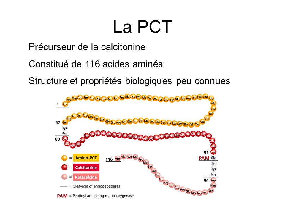 La PCT Précurseur de la calcitonine Constitué de 116 acides aminés
