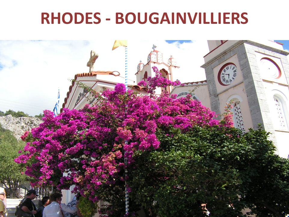 RHODES - BOUGAINVILLIERS