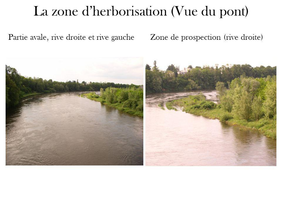 La zone d'herborisation (Vue du pont)