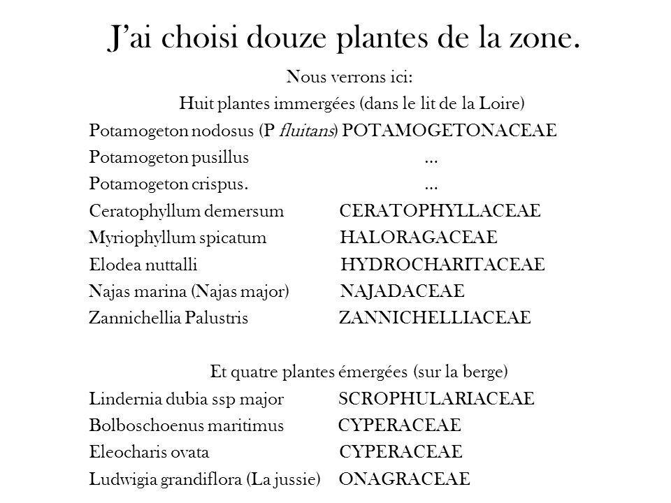J'ai choisi douze plantes de la zone.