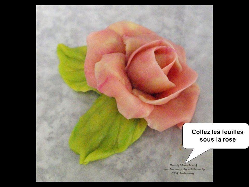 Collez les feuilles sous la rose