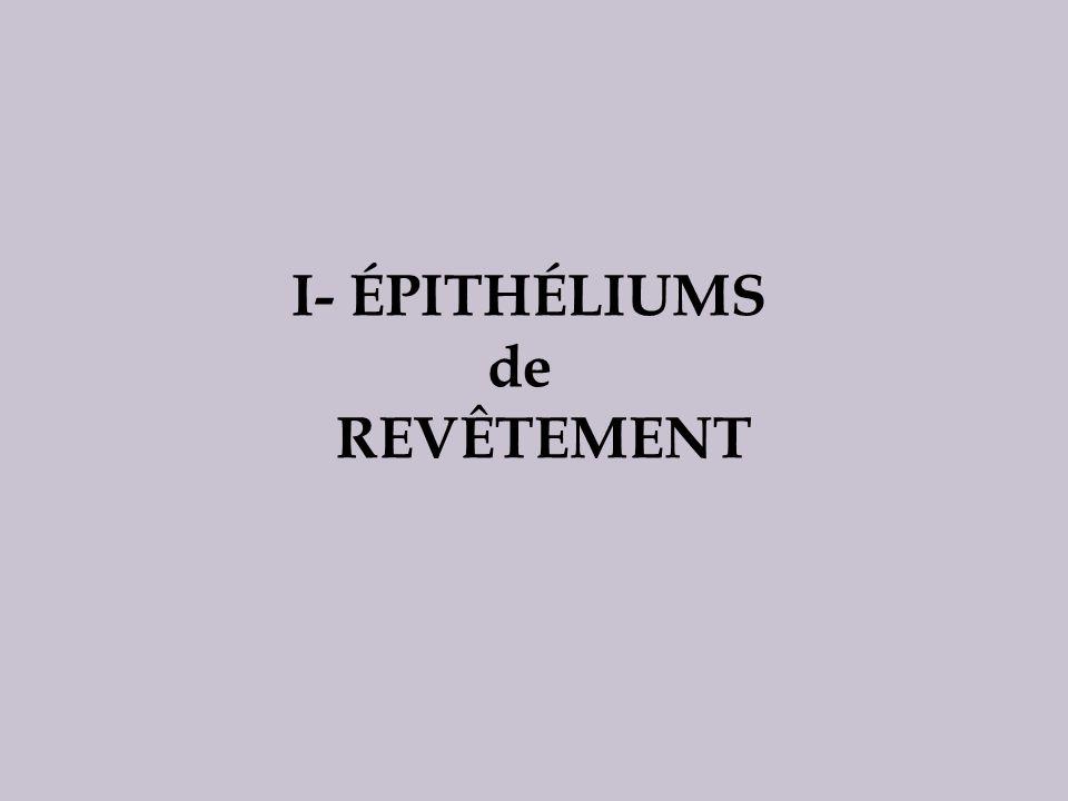 I- ÉPITHÉLIUMS de REVÊTEMENT