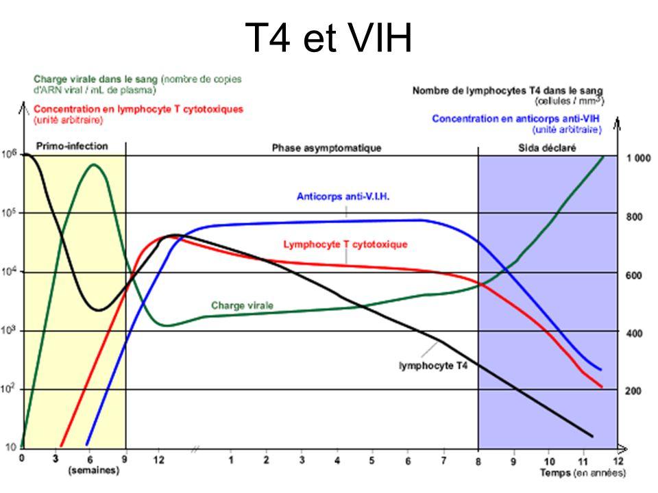 T4 et VIH