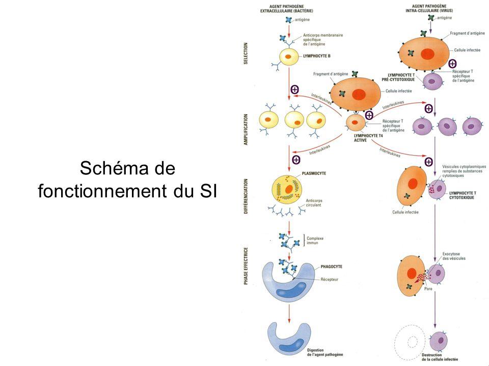 Schéma de fonctionnement du SI