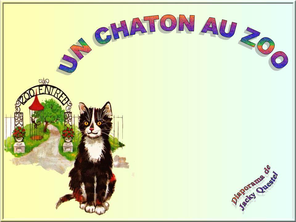UN CHATON AU ZOO Diaporama de Jacky Questel