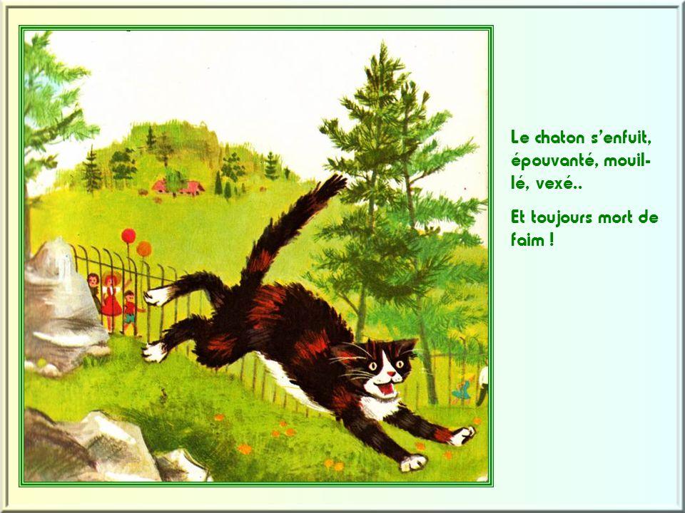 Le chaton s'enfuit, épouvanté, mouil-lé, vexé..
