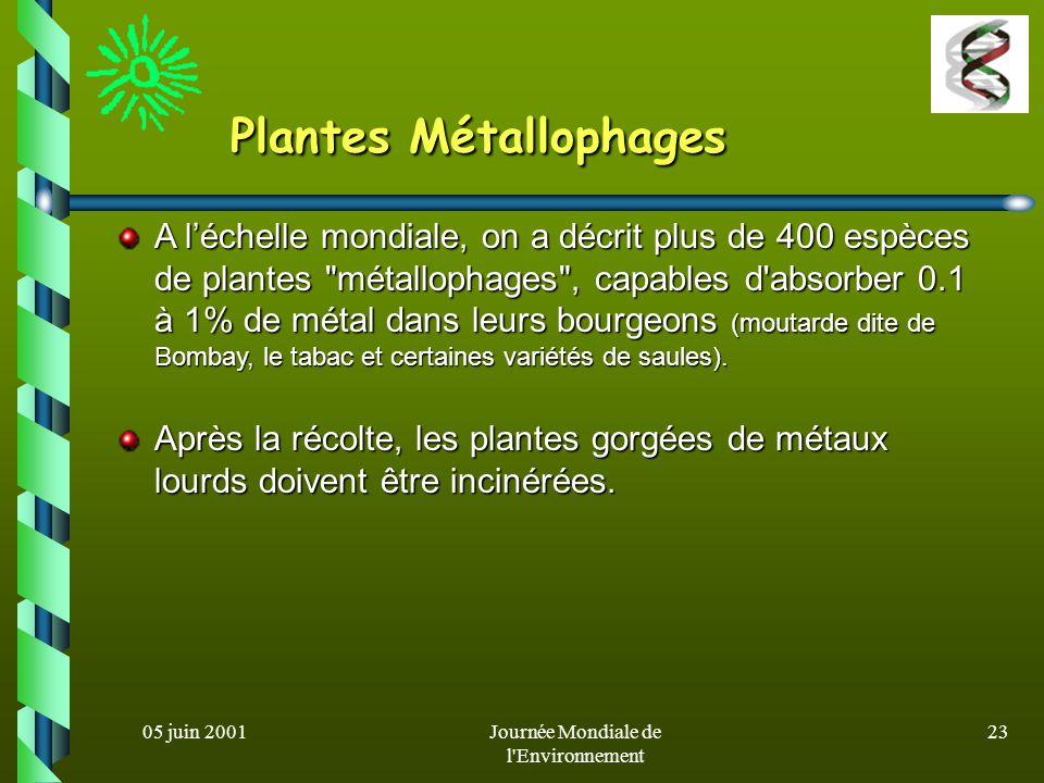 Plantes Métallophages