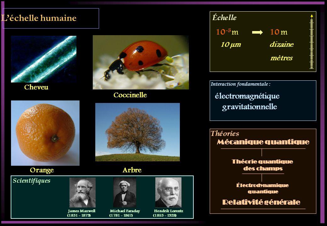 L'échelle humaine 10-5 m 10 m électromagnétique gravitationnelle