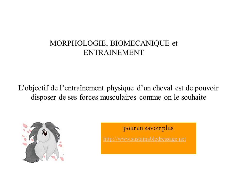 MORPHOLOGIE, BIOMECANIQUE et ENTRAINEMENT