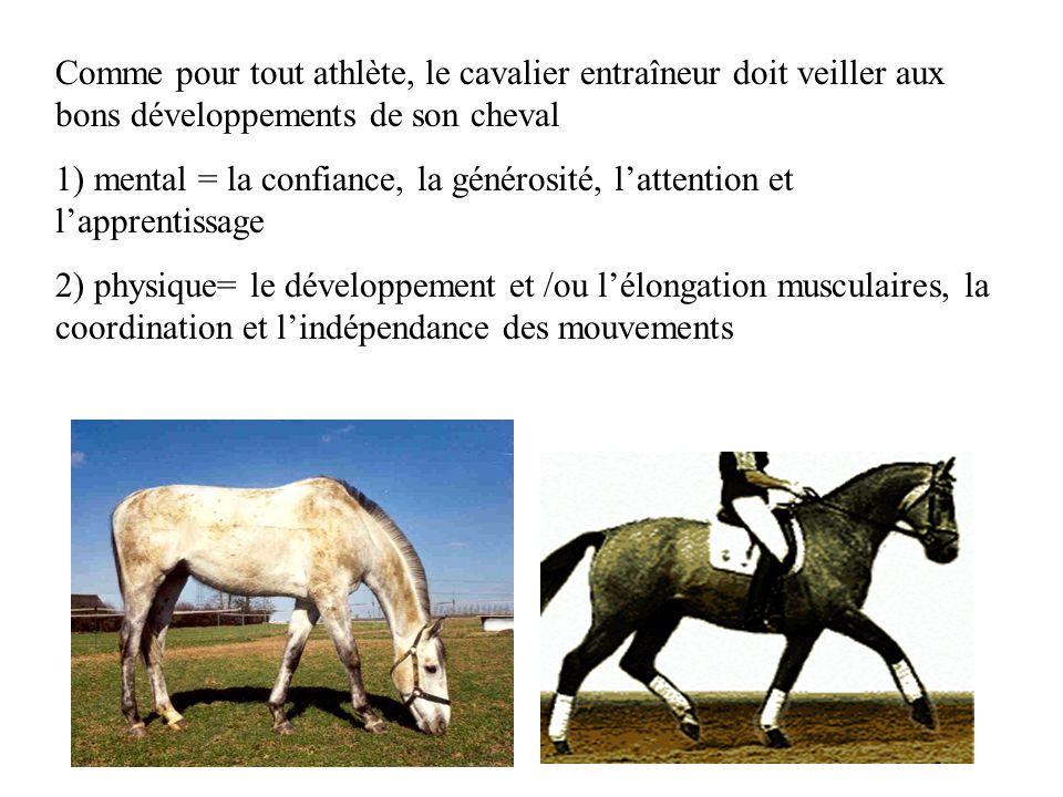Comme pour tout athlète, le cavalier entraîneur doit veiller aux bons développements de son cheval