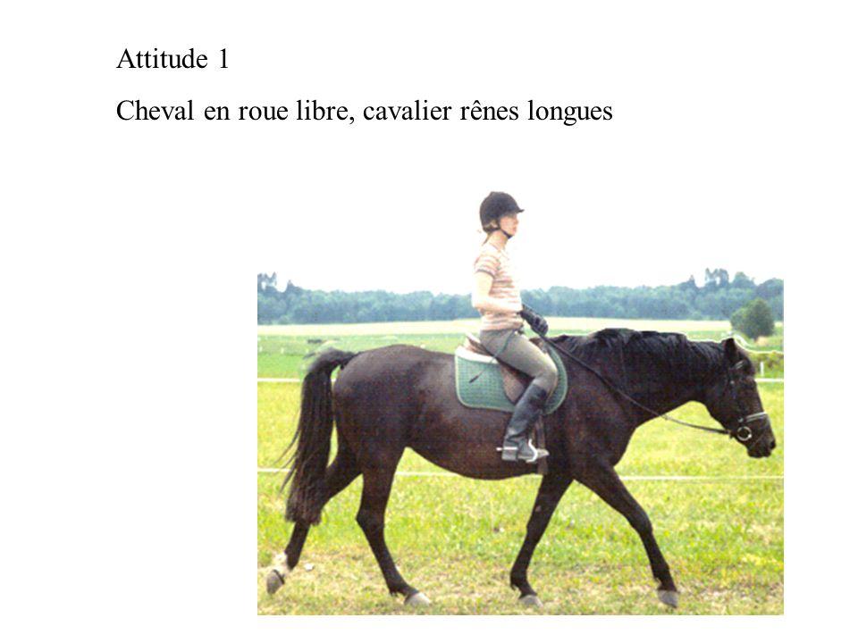 Attitude 1 Cheval en roue libre, cavalier rênes longues