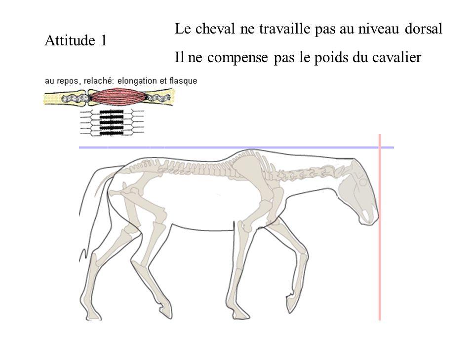 Le cheval ne travaille pas au niveau dorsal
