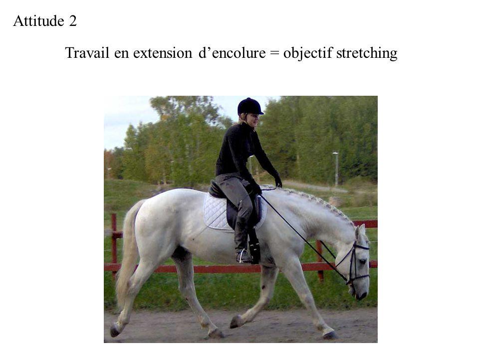 Attitude 2 Travail en extension d'encolure = objectif stretching