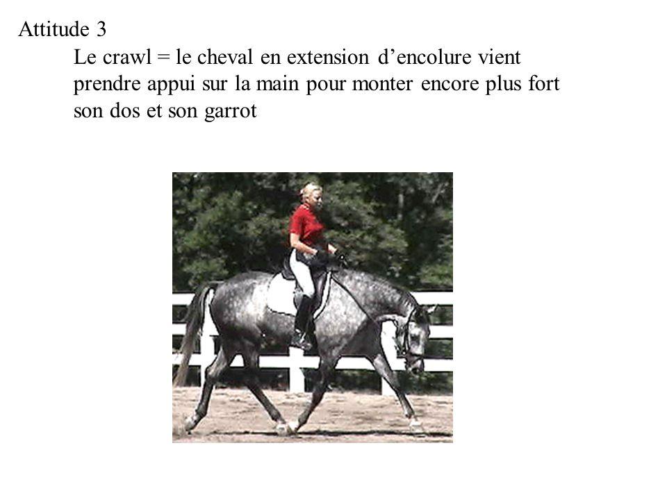 Attitude 3 Le crawl = le cheval en extension d'encolure vient prendre appui sur la main pour monter encore plus fort son dos et son garrot.