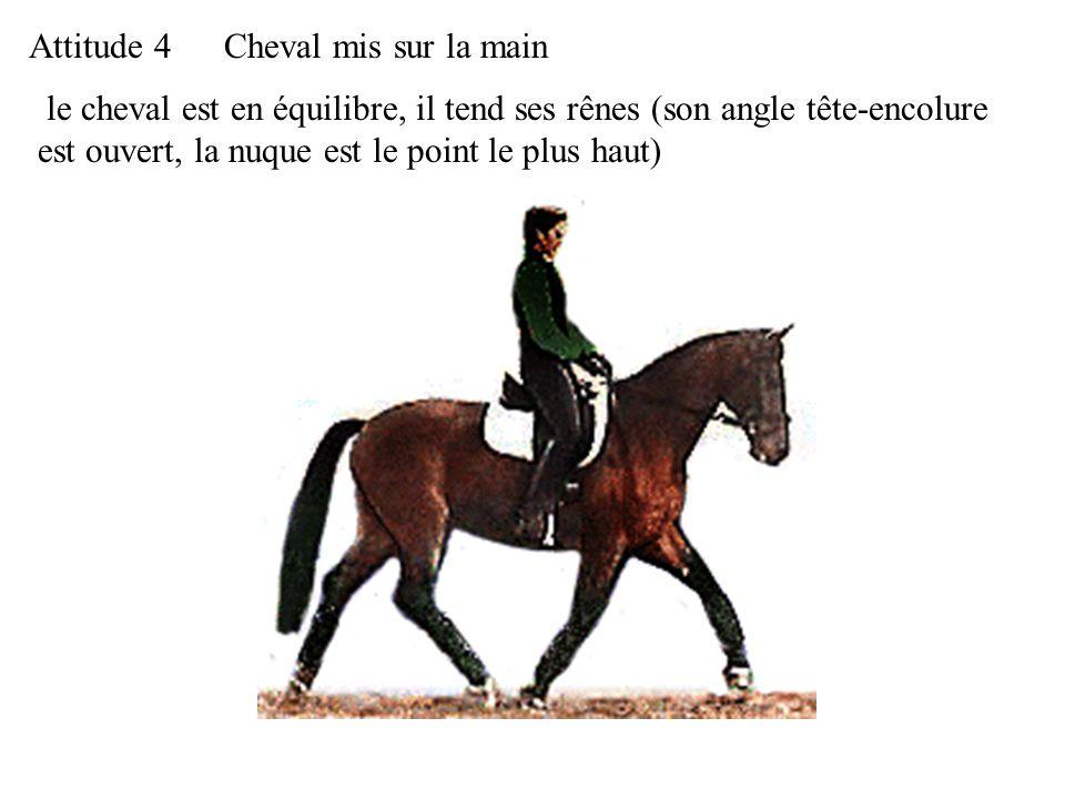 Attitude 4 Cheval mis sur la main.