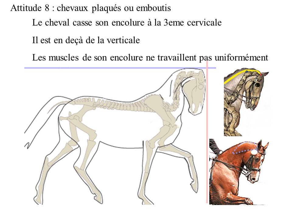 Attitude 8 : chevaux plaqués ou emboutis