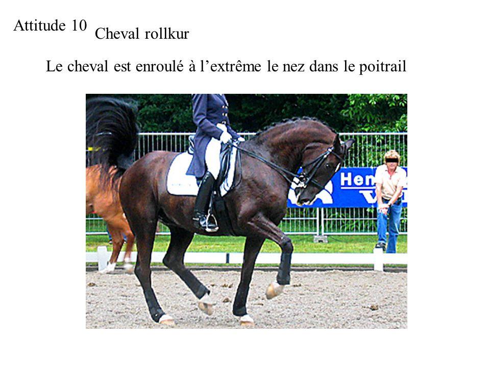 Attitude 10 Cheval rollkur Le cheval est enroulé à l'extrême le nez dans le poitrail