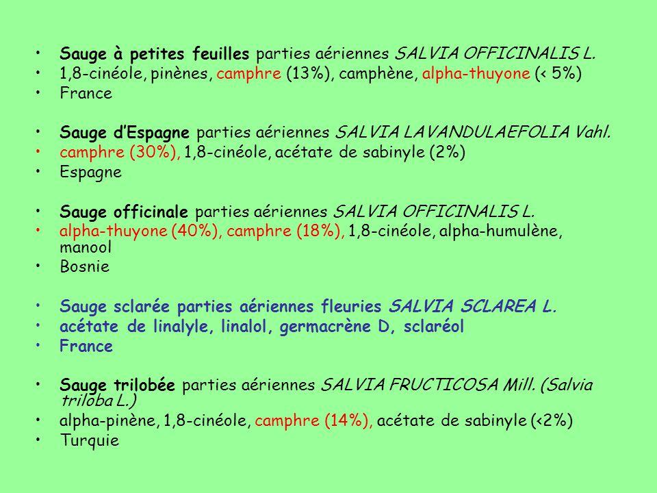 Sauge à petites feuilles parties aériennes SALVIA OFFICINALIS L.