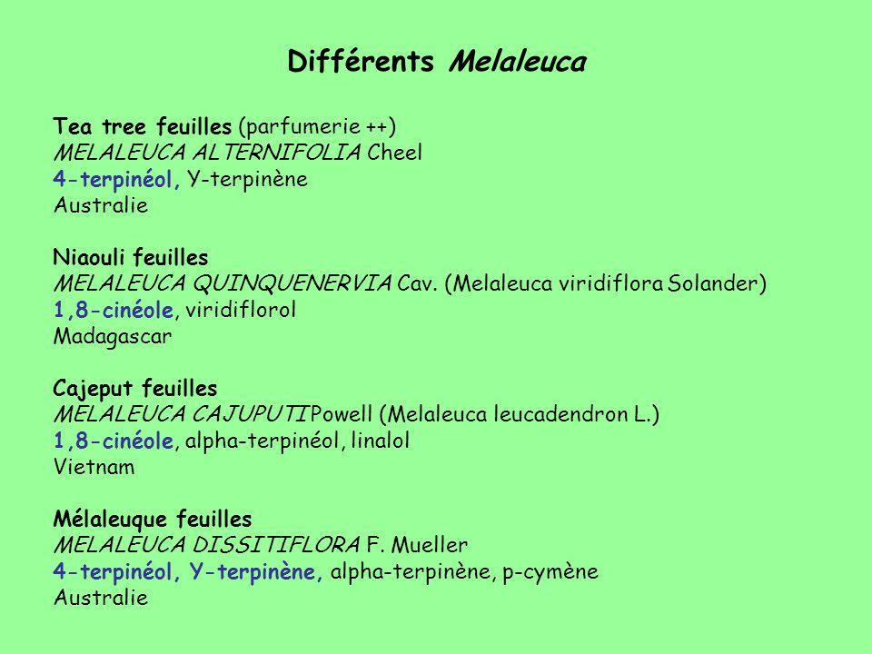 Différents Melaleuca Tea tree feuilles (parfumerie ++)