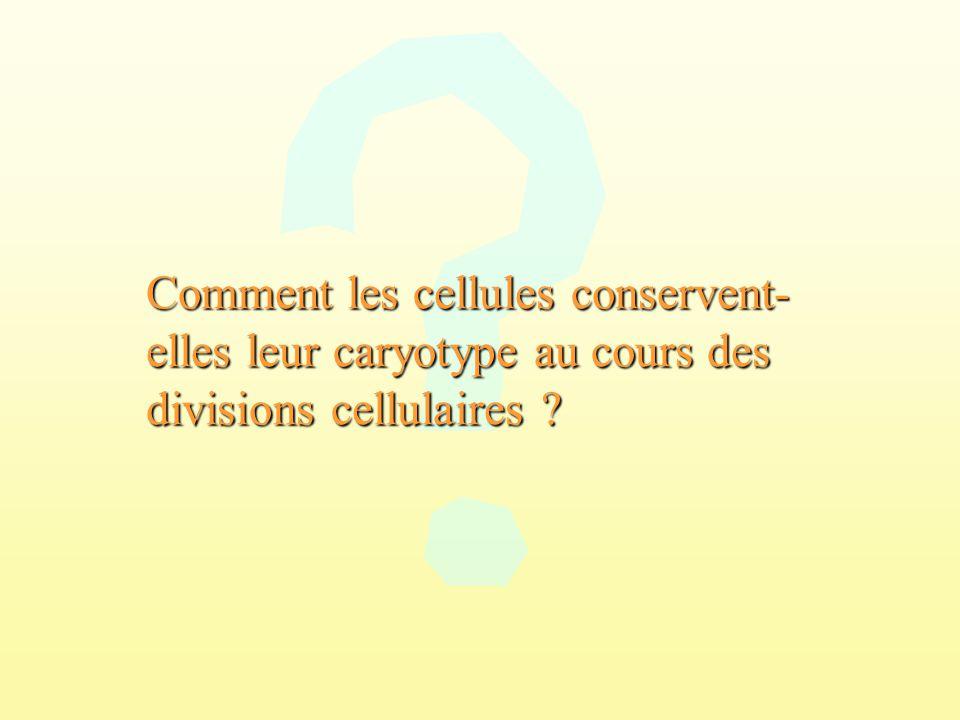Comment les cellules conservent-elles leur caryotype au cours des divisions cellulaires